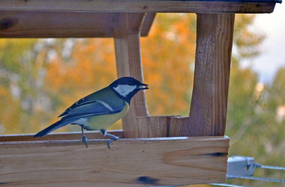 Ragadozó madarak (és egy bizonyos Harley Quinn csodasztikus felszabadulása)